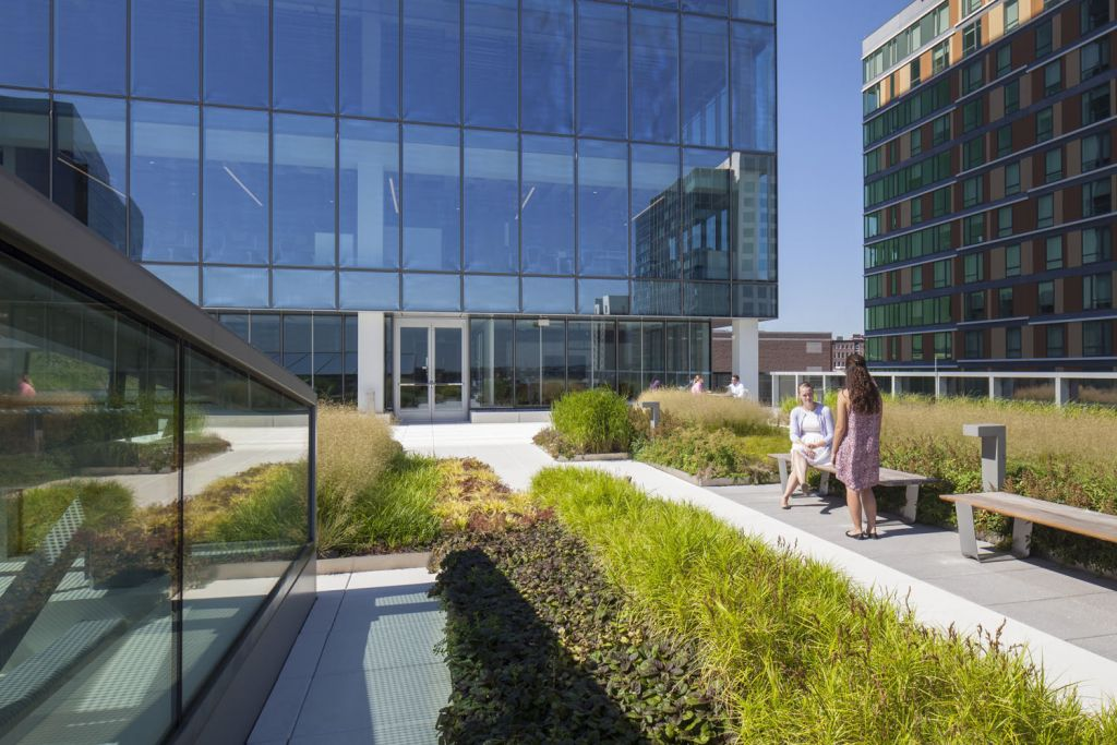 Green Roof And Roof Deck